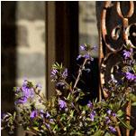 Détail floral sur le fer forgé de l'ancienne église du village
